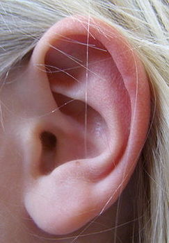 耳5.jpg