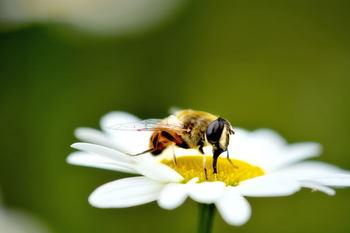 蜂.jpg